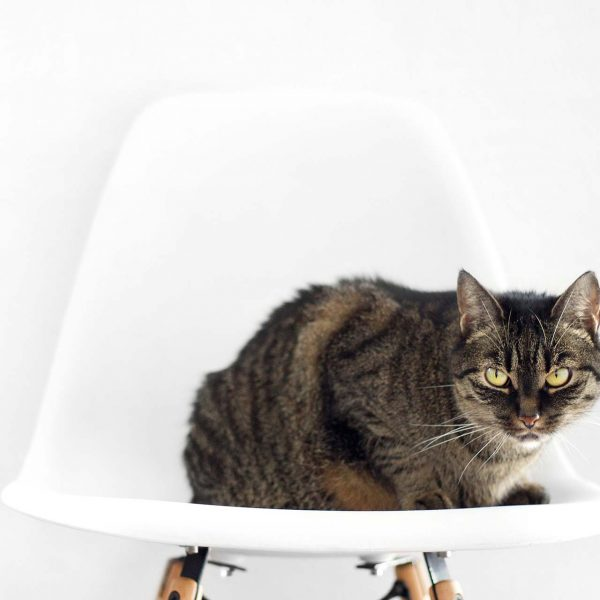 Cat on The Chair